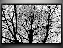 Photo of Branches