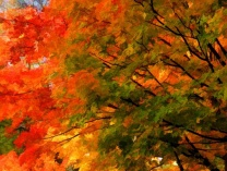 A photo of Autumn Splendor