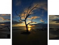 Photo of Sunrise Driftwood Beach