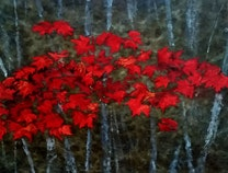 Photo of The Red Season