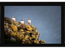 Photo of Puffin Club
