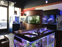A photo of Water Colors Aquarium Gallery