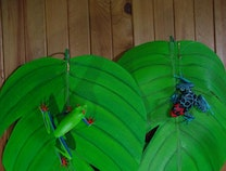 Photo of Jungle Frogs