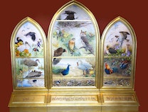 Photo of Birds of the Bible
