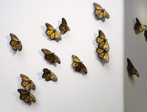 Photo of The Butterfly Effect