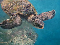 Photo of Wailea Honu